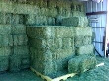 High Protein Alfalfa Hay,Timothy Hay,Wheat Bran,Wheat Straw