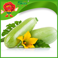 Expoerting Frozen Zucchini Colored Bulk Zucchinis Good Quality of Vegetables