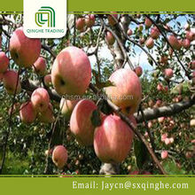 fresh apple, fuji apple fresh fruit