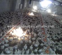 Automático de alimentación de pollo y sistema de bebederos