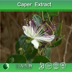 High quality caper P.E, caper fruit extract,caper extract