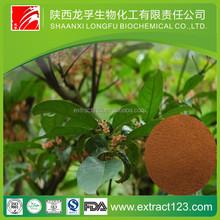 Manufacturer sales pygeum africanum extract