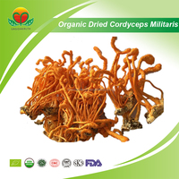 Manufacture Supply NOP/EU Organic Dried Cordyceps militaris