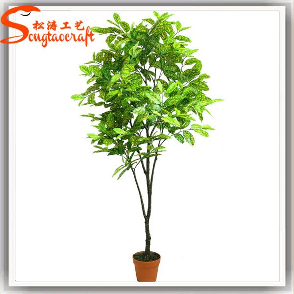 Gros chinois evergreen durable petite taille mini makple topiaire arbre bonsa plantes en pot - Arbre petite taille ...