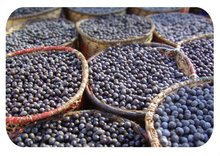 Acai Berry Powder, Extract, Concentrate, Freeze Dried, Organic, Capsules, Juice Powder, Fruit Powder