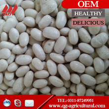 medium white kidney beans square type