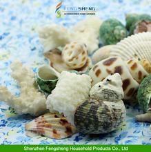 Assorted Sea Shells Beach Mixed Medium Shells Home Decoration Seashells