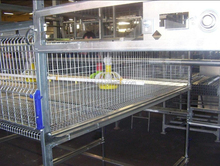 H Frame DYHT Hot Dipped or Plastic Coated Automatic Broiler Cages for Chickens