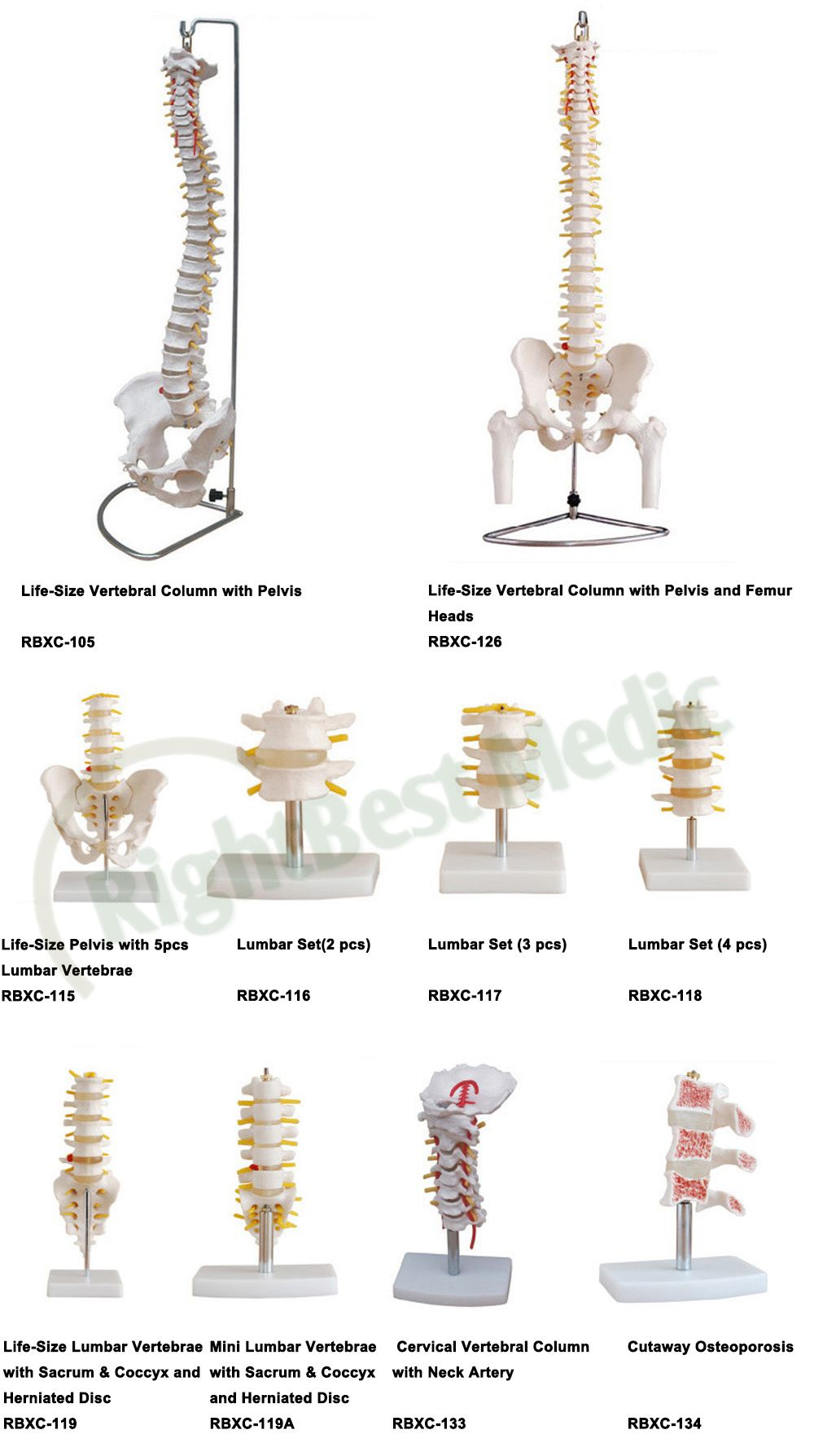Lumbar Vertebrae With Sacrum Coccyx And Herniation Disc Education