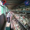 chicken coop wire netting