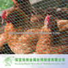 Lowest Price PVC Coated Hexagonal Chicken Wire Mesh