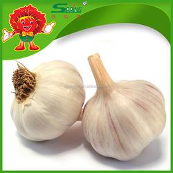 Factory Direct Supply Garlic, Organic Garlic, China Garlic Price