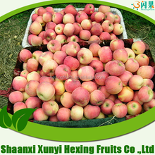 china apple fruit market prices qinguan apple (apple:fuji, huaniu, gala, golden,qingguan, red star)