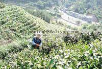 9373 china green tea brand herbal tea