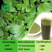 High quality product Ashitaba extract/ashitaba powder/Angelica extract
