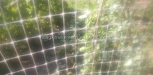 agriculture reinforced plastic plant support net/pea and bean net