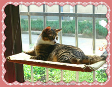 Window Mounted pet Bed Cat bed