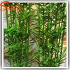 Guangzhou factory direct wholesales life size artificial tree lucky bamboo plants price for sale plastic leaves garden decor