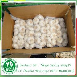 buy garlic fresh garlic for sale
