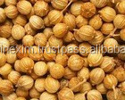 Gujarat Indian Corainder SEeds