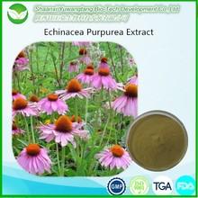 ISO supplier Echinacea Purpurea Extract with Chicoric acid