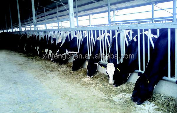 cow headlock3