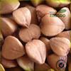 China Raw Buckwheat flour, good taste buckwheat tea, without buckwheat husk at a good buckwheat price