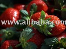 Fresh Strawberries from Mahabaleshwar