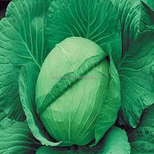 gan lan zhong zi verdure fresche di semi di broccoli broccoli prezzo