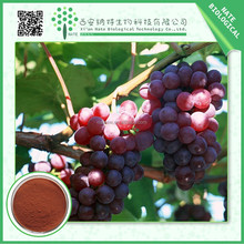 Low price chinese factory grape seed extract 95%