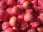 Fresh Apples from Himachal Pradesh