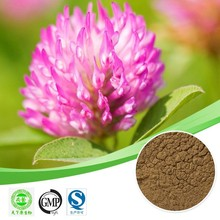 Hot sales plant extract Red clover extract/Isoflavones 8%-60%/Help cough Free sample