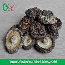 Export Price for Bulk Dried Champignon, Maitake Mushroom, Lentinus edodes