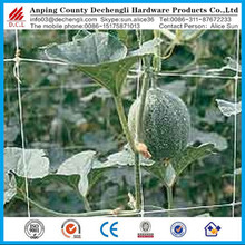 factory direct price extruded plastic pea and bean net/climbing plant support net/agricultural cucumber net