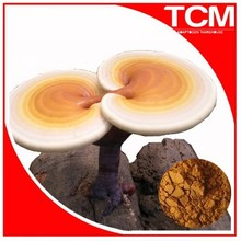 Health food anti-cance-r natural herbal reishi mushroom extract,ganoderma lucidum extract