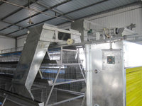 galvanized A type laying hen chicken cages for sale