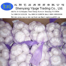 High quality Wholesale price fresh natural garlic from China