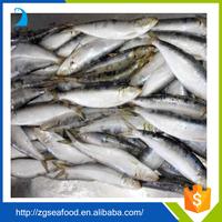 Nature QS seafood Sardine Fish and block quick frozen sardine