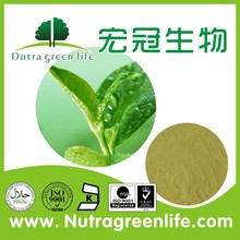 manufacturer stable supply green tea extract / green tea extract powder