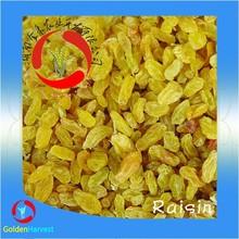 Chinese dried raisins / dried golden raisins/dried green raisins prices