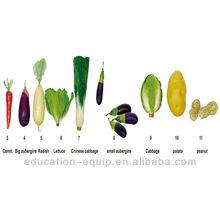 SE101012 Simulation Model, Vegetable