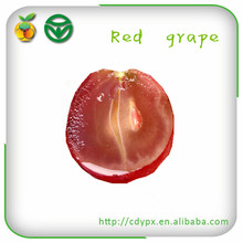 export sweets red globe grapes
