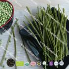 Orgânica GMO frete de feijão verde de macarrão ( Fettuccine )