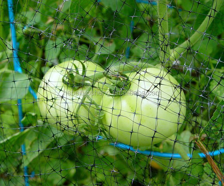 Anti Bird Fruit Garden Vegetable Net 6 Jpg