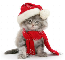 Cat wearing christmas Hat ,Black-and-white kitten in a Santa hat