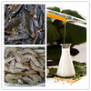 /product-gs/hxy-2s-soya-lecithin-as-fish-feed-ingredients-emulsifier-60286640345.html