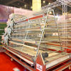 Automatic layer chicken battery cage /layer egg chicken cage/layer chicken cage