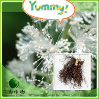 2014 Hot Product Black Cohosh Extract from China Manufacturer