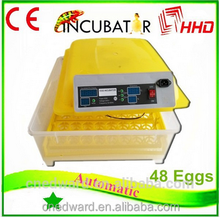 2015 Newest automatic egg chicken house design for layers for sale EW-48