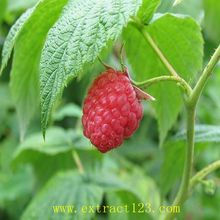 Factory supply Raspberry extract (Palmleaf Raspberry Fruit Extract)